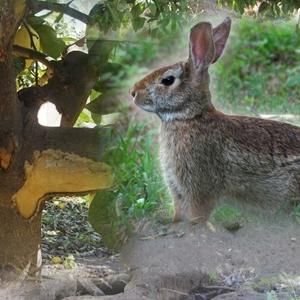Control de Conejos en Cultivos Agrícolas