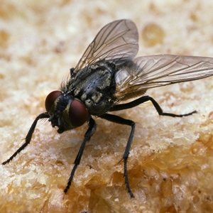 Manejo Integrado de Plagas (MIP) para un óptimo control de moscas